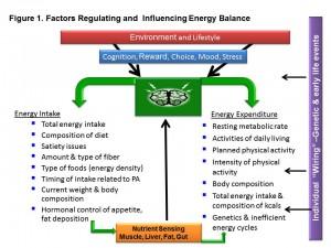 Energy balance - Melinda Manore